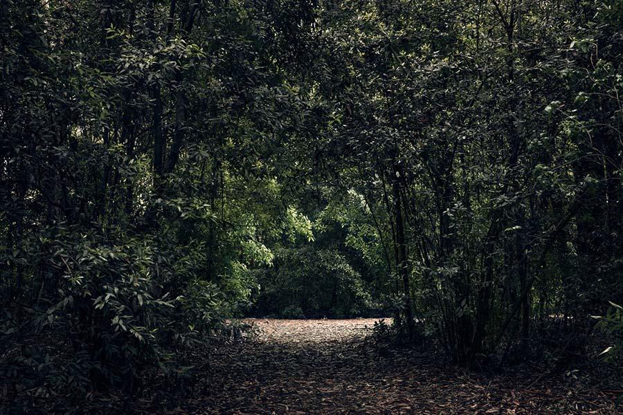 Borde de bosque