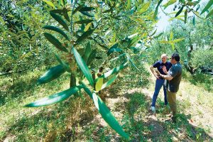 El abrazo de los ulivastri